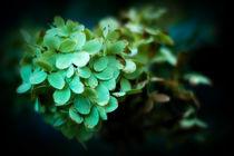 Green Dream von Deborah Wolfe