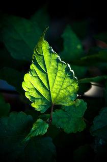 Leaf Diva von Deborah Wolfe