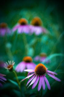 Meadow Wild by Deborah Wolfe