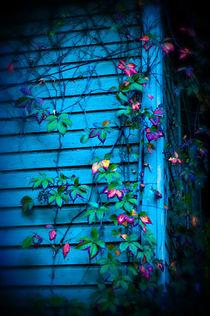 Overgrown by Deborah Wolfe