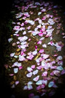 Rose Walk von Deborah Wolfe