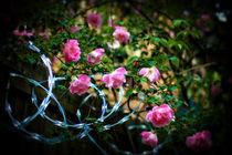 Steel Roses II by Deborah Wolfe