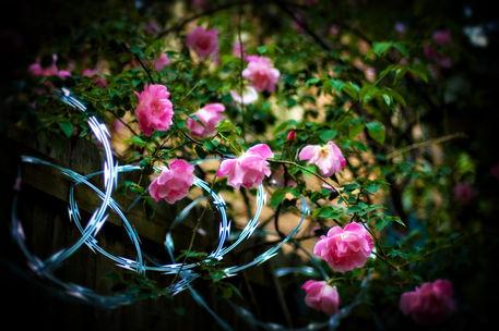 Steel-roses-ii