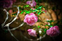 Steel Roses by Deborah Wolfe
