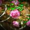 Steel-roses