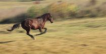 Horse Running by Radu Razvan