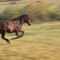 005495horse-running-5d4-jpg
