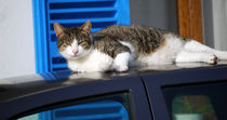 Katze auf dem Autodach by Thomas Brandt