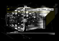 Spinal-columns