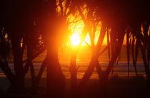 Sunrise by aleszev