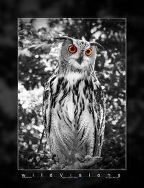 Eagle Owl von Waldemar Moll