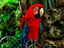 Papagayo by Daniel  Soriano Correa