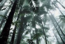 Misty jungle by Nicklas Wijkmark