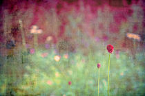 Two by Friederike Alexander