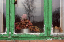 Window with peeling paint by Palle Smith-Petersen