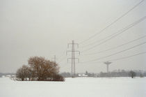Tree and power pylons by Palle Smith-Petersen