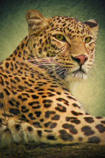 Leopard  von AD DESIGN Photo + PhotoArt