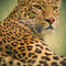 'Leopard ' by AD DESIGN Photo + PhotoArt