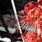 Equinox-flower-20-by-26
