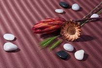 Strohblumen, Herbst, Stilleben, Blumen, Steine, Ähren, Fotokunst von Michael Guntenhöner