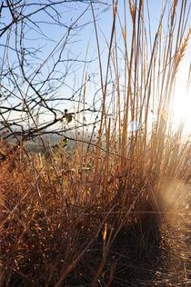 Sunny day 1 von fbphoto