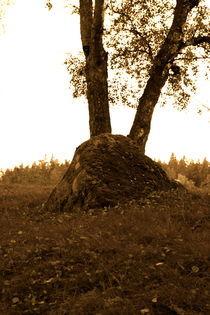 Evening forest von Veronica Di Dato