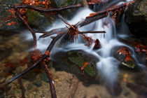 Web of branches by Danislav Mironov
