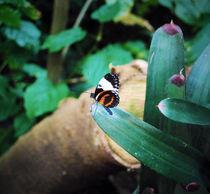 Butterfly by Melanie Mayne