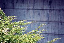 Urban Foliage von Melanie Mayne