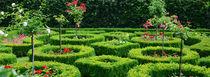 Rosengarten von Thomas Brandt