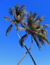 Palmen von Thomas Brandt