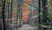 Waldweg by Thomas Brandt