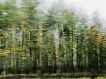 Waldrausch I von Hartmut Fittkau