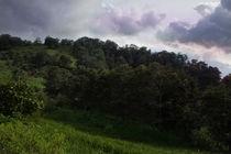 El-hado-guatemala-forest-above-antigua2