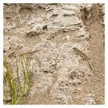 Desert Lizard von Sergio Miranda
