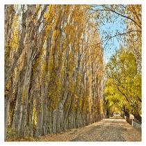Country road von Sergio Miranda