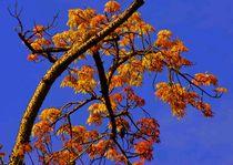Tree-blue-sky
