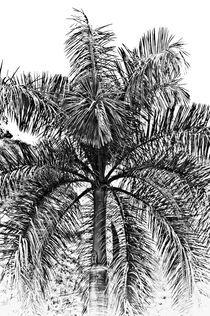 Jamaican palm tree von Stefan Antoni - StefAntoni.nl