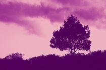 Einsamer Baum by dresdner
