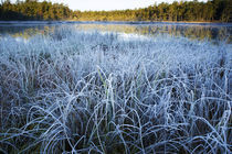 Frosty morning by Nicklas Wijkmark