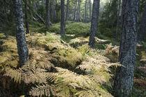 Deep forest von Nicklas Wijkmark