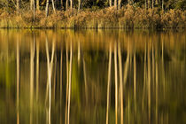 Mirrors on forest lake by Nicklas Wijkmark