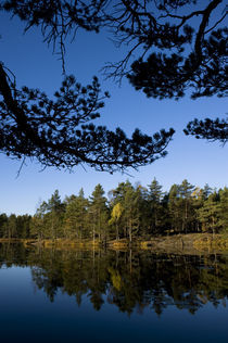 Small forest lake by Nicklas Wijkmark