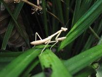 Mantis Blade by Branden Thompson