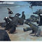 Costellazione-delle-galapagos