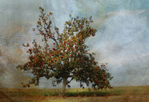Apfelbaum  by Heidi Brausch
