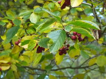 Autumn has begun von Mascha Olie