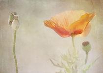 nature composition von Franziska Rullert