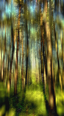 Im Zauberwald von Matthias Rehme