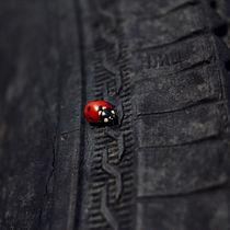 Ladybug by Evgeniya Kuleshova
